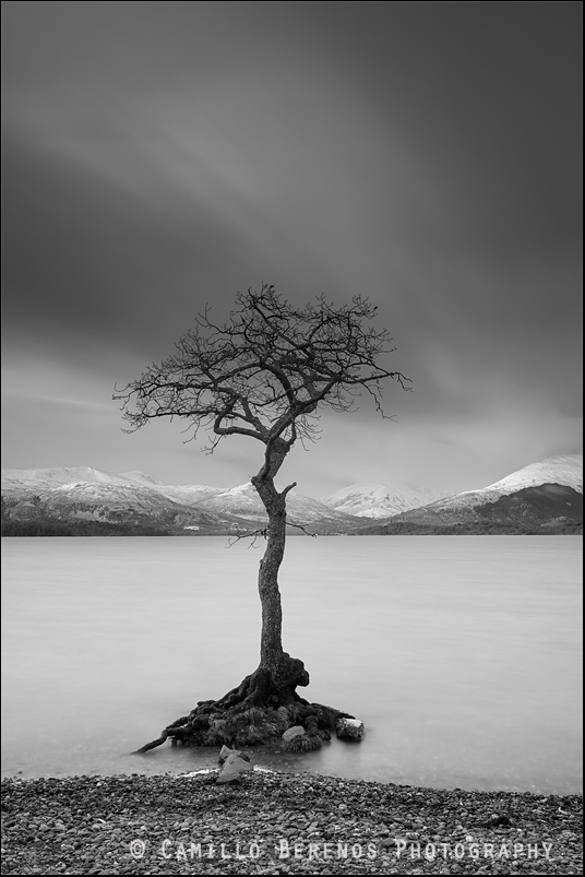 The partially flooded lone tree in Loch Lomond with snow-capped hills in the background in black and white