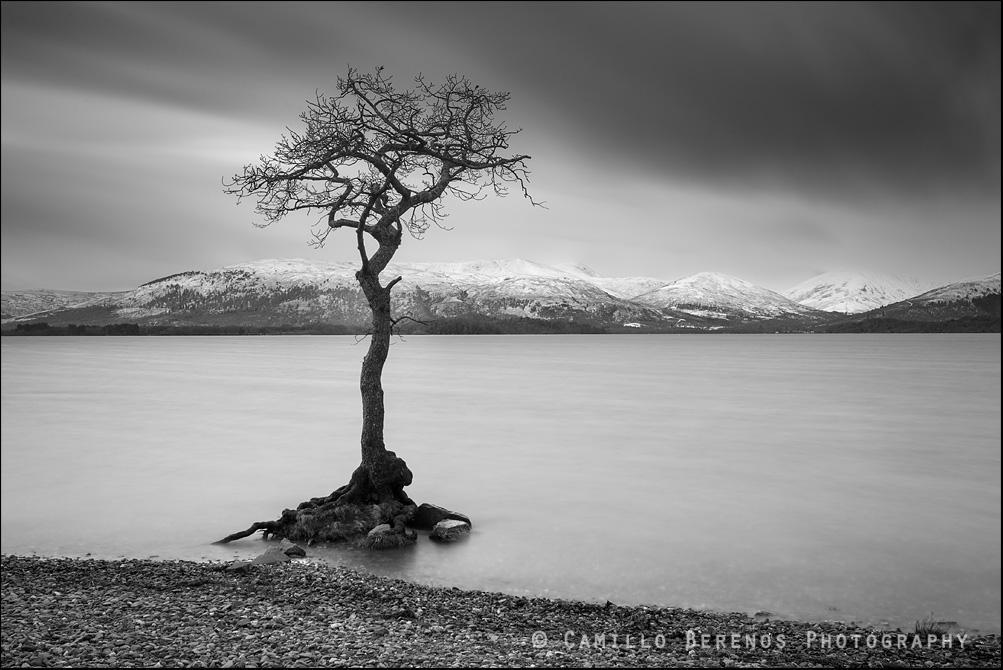 The oak tree at Milarrochy Bay, Loch Lomond photographed using a long exposure